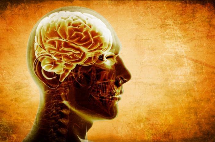 Could brain size predict risk of cognitive impairment?