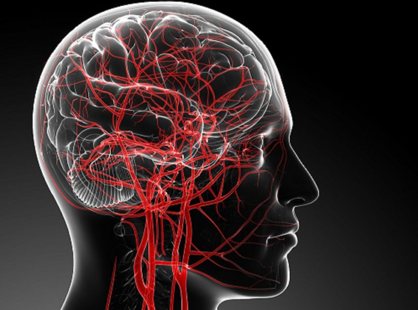 blood flow in the brain