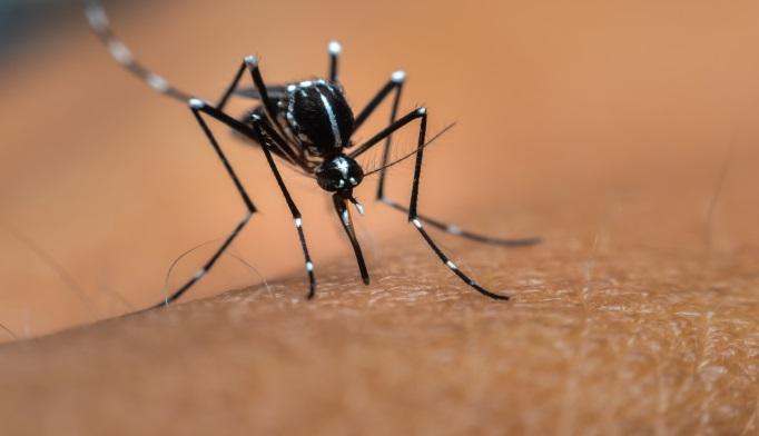 malaria bug