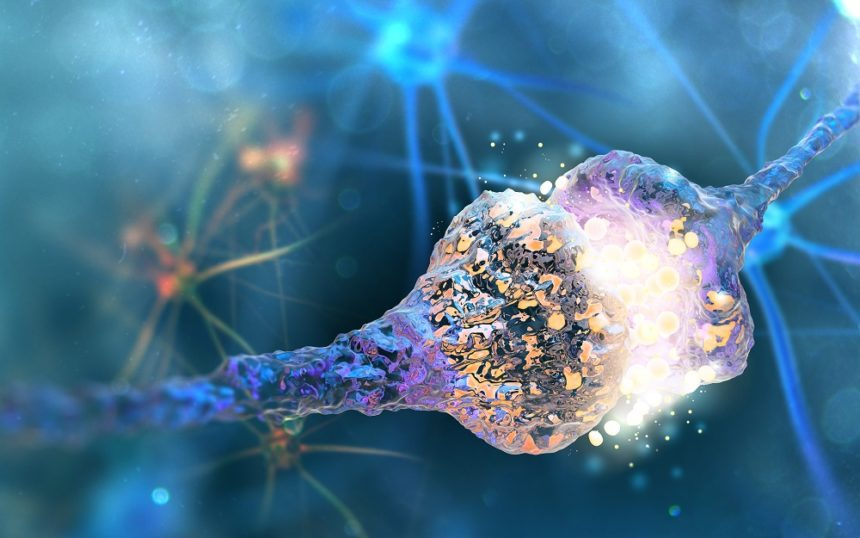 Synapse and neuron cell exchanging message