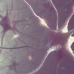 nerve cells, human brain