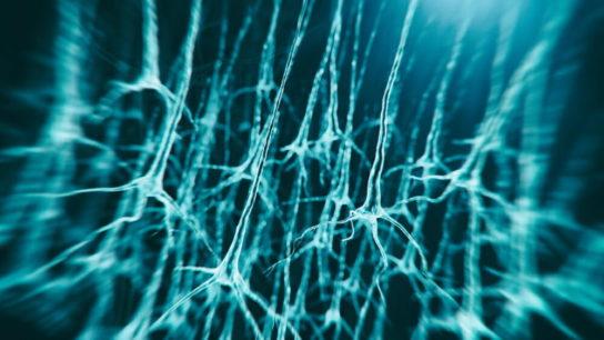 illustration of neuron system