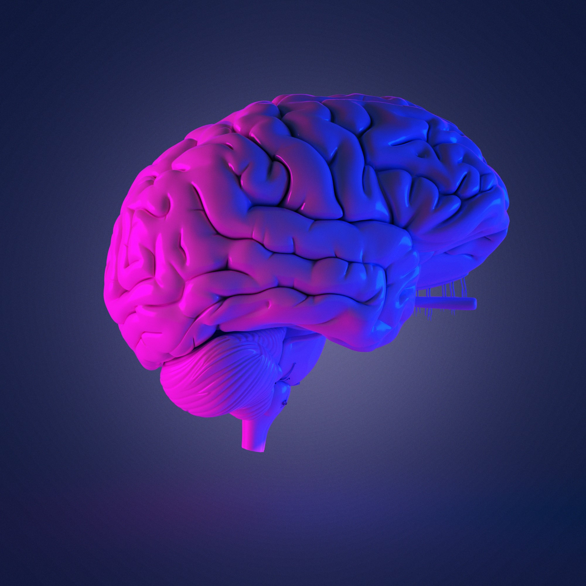 Brain Structure and Function Become Coupled During ...