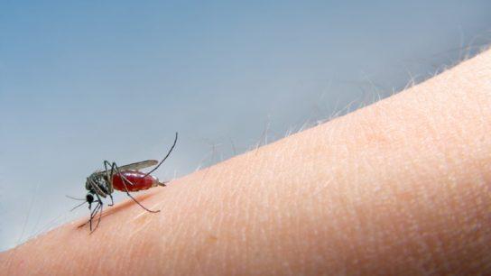 west nile virus, mosquito, blood