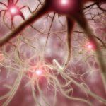 nerve cell, neuron